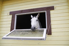 Horse in a stable window in the village Vladykino in Russia Royalty Free Stock Photos