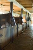 Horse stables. In outdoor museum Royalty Free Stock Photos