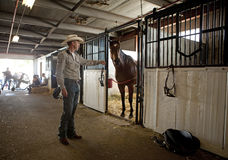 A horse in the stables, Calgary Stampede Royalty Free Stock Image