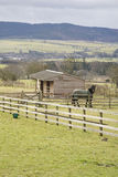 Horse and stables in field. Scenic view of horse standing in paddock near to stables in countryside scene, Northumberland, England Royalty Free Stock Images