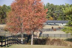 Horse Stables and Horses. In the Country in Autumn Stock Photos