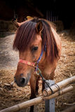 Horse in the stables. Royalty Free Stock Photography