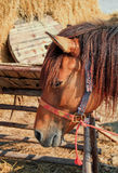 Horse in the stables. Stock Photos