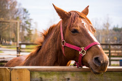 Horse at Stables Stock Image