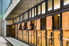 Horse stables modern. Typical modern farm horse stables with three working brown horses looking out of stable windows Royalty Free Stock Image