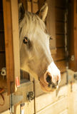 Horse in stables Royalty Free Stock Images