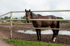 Horse in stabling Stock Photos
