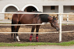 Horse in stabling Royalty Free Stock Photo