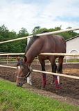 Horse in stabling Stock Image