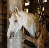 Horse in a stall Royalty Free Stock Image