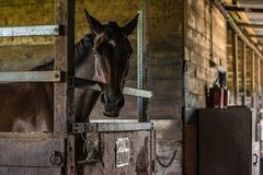 Horse in stall Royalty Free Stock Photos