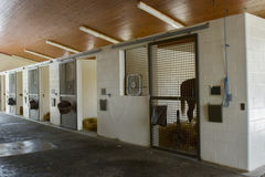 Horse in stall of equine hospital. Horse standing in stall of equine hospital facility royalty free stock photo