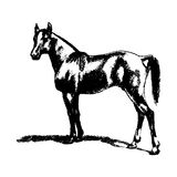 Horse, stallion, horse - picture. Silhouette on a white Stock Photo