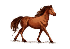 Horse or stallion, mustang running sketch. Equine animal or horse, stallion running sketch. Wildlife mustang gait and domestic marish ambling, thoroughbred mare Stock Photography