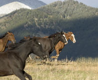 Horse Stampede Royalty Free Stock Photography Image 5635497