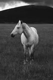 Horse standing Stock Images
