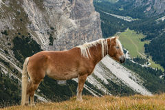 Horse standing above valley Stock Photo