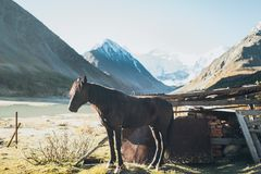 Horse standing in Altay Mountains Royalty Free Stock Photography