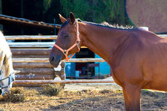 Horse standing in aviary Stock Photo