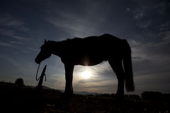 Horse standing on backlight Stock Photo