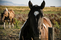 Horse Standing by the Fence Stock Image