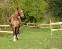 A horse standing in field Stock Image