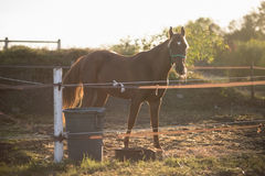 Horse standing on field against sky. During sunny day royalty free stock photos