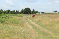 Horse standing in the field near the road Stock Image