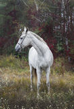 Horse standing in the forest on the green grass near the trees. Gray horse standing in the forest on the green grass near the trees stock image