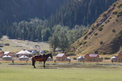 Horse standing in front of yurts Stock Photo