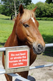 Horse Standing At Gate With Warning Sign Royalty Free Stock Photography