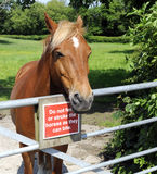 Horse Standing At Gate With Warning Sign Royalty Free Stock Images