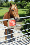 Horse Standing At Gate With Warning Sign Royalty Free Stock Photos