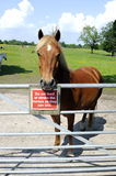 Horse Standing At Gate With Warning Sign Stock Image