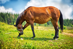 Horse standing in a green field. And enjoying in a beautiful sunny day Royalty Free Stock Photography