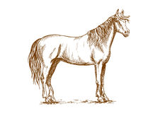 Horse standing with head turned Stock Photo
