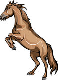 Horse standing on hind legs. Vector drawing bay horse standing on hind legs Royalty Free Stock Image