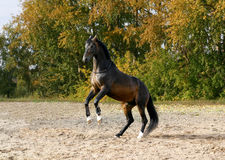 Horse standing on his two legs Stock Photo
