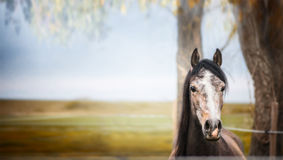 Horse standing and looking at camera over nature background wit tree and foliage Royalty Free Stock Photography