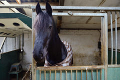 Horse in manege stable. Horse standing in manege box Stock Image