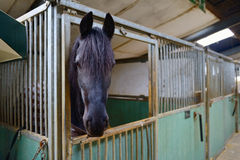 Horse in manege stable. Horse standing in manege box Stock Photo