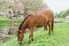 Horse standing near canal with green grass, outdoor. View Stock Images