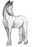 Horse standing Royalty Free Stock Image