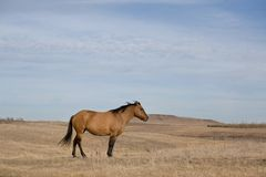 Horse standing in pasture Stock Images