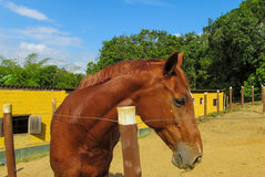 Horse standing in the pen. On the sand ground stock photo