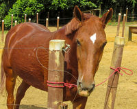 Horse standing in the pen. On the sand ground stock photography