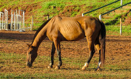 Horse standing in the pen. On the sand ground stock photos