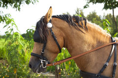 Horse standing Royalty Free Stock Photography
