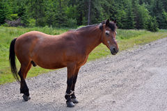 Horse standing on the road Stock Photos