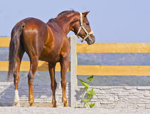 Horse are standing on the sand near the fence in the paddock Stock Photo